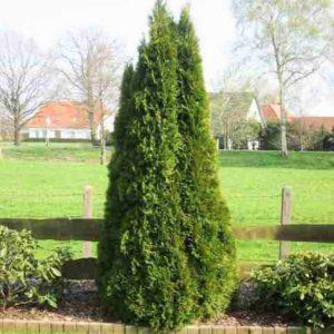 Bäume im Garten gepflegt