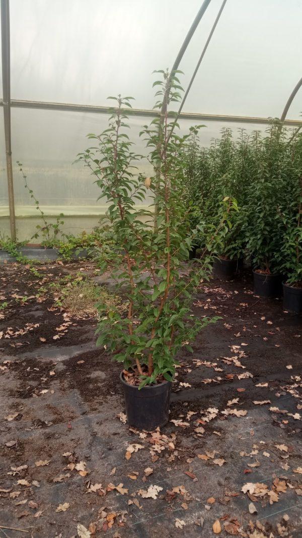 Jungpflanzen in Vasen